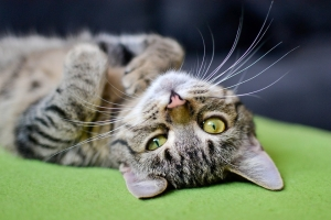 cat-3062885_960_720.jpg