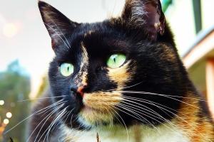 cat-4130590_960_720.jpg
