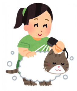 wash_pet_cat.png