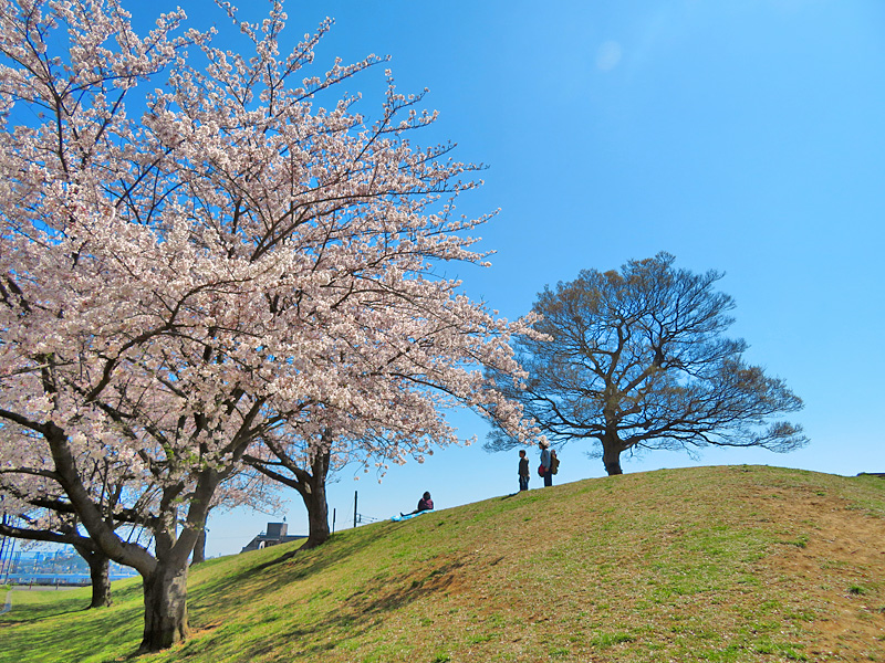190404,榎の丘と桜1