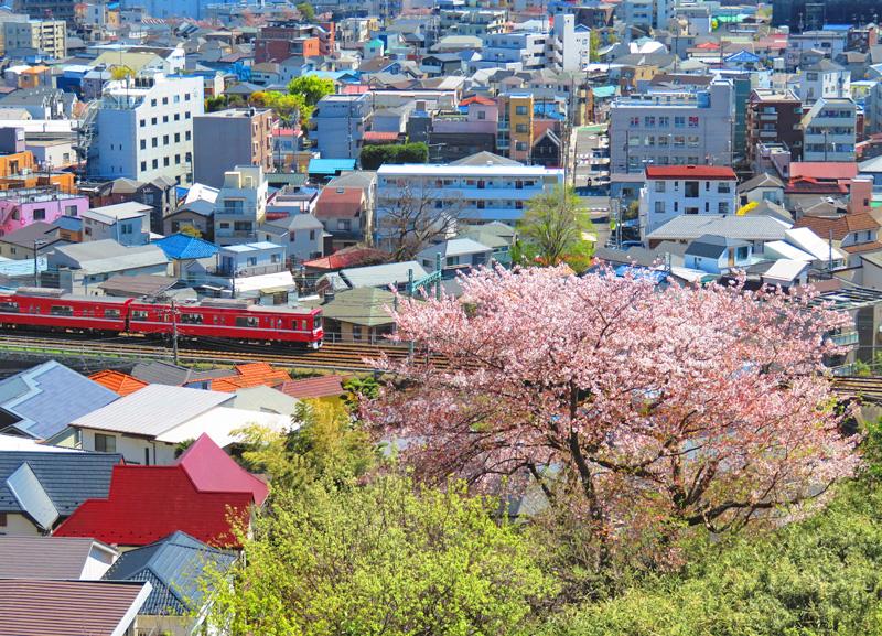 190411,京急と桜