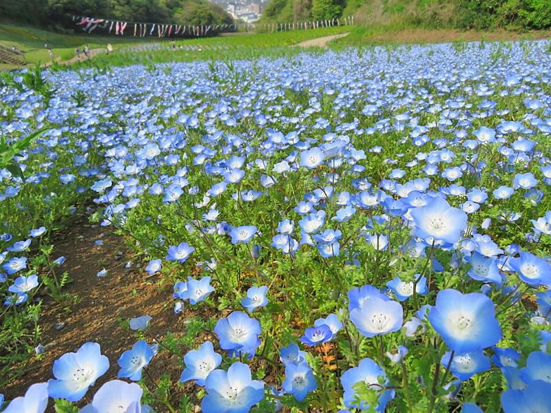 190421,花の国1
