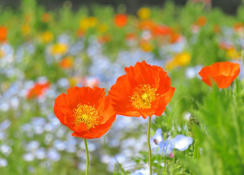 190421,花の国4