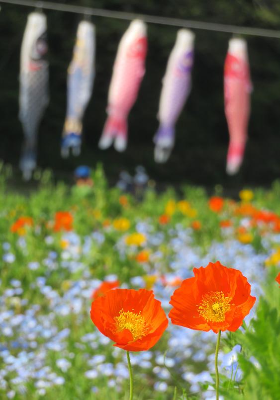 190421,花の国7