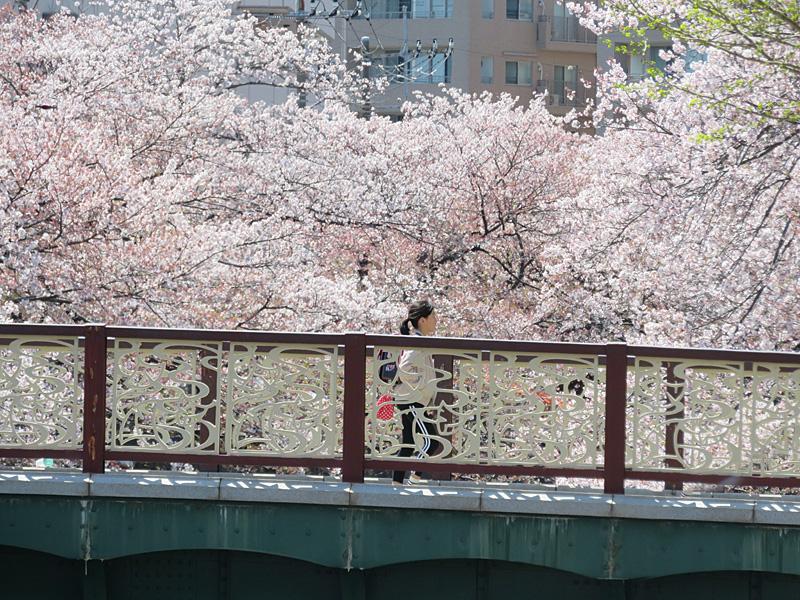 190405,大岡川桜2,2