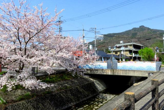 水分れ交差点の桜