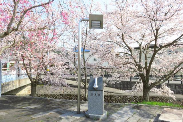 日本一低い分水界の碑と桜