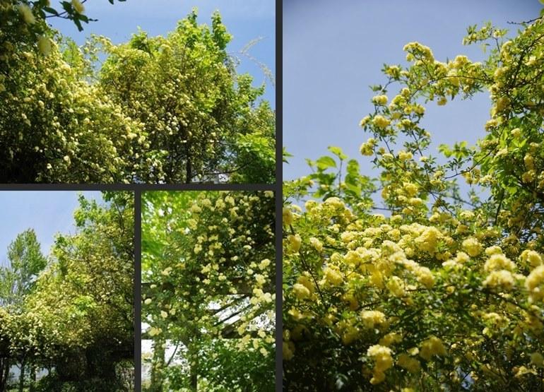 IMGP3545-vert-horz.jpg