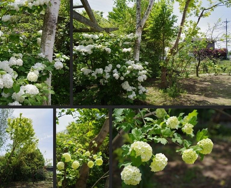 IMGP3589-horz-vert.jpg