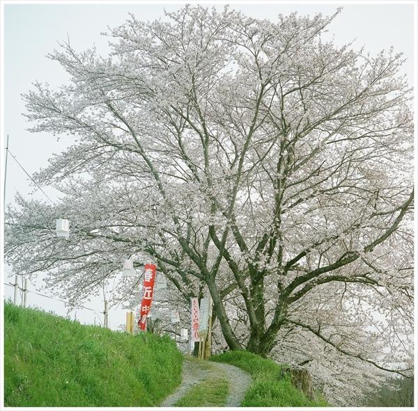 n---テレローライ 2019-4-7 フジ400 桜38080010_R