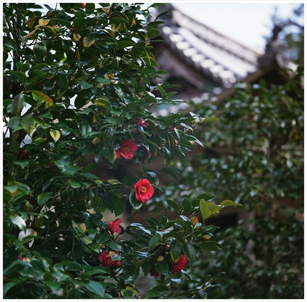 n---テレローライ 2019-3-24  フジ400 桜 f56 1-500 38080003_R