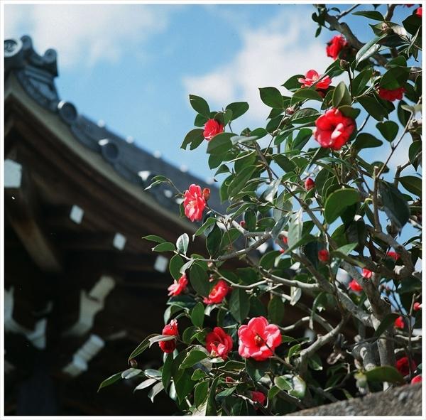 n---テレローライ 2019-3-24  フジ400 桜 f56 1-500 38080002_R