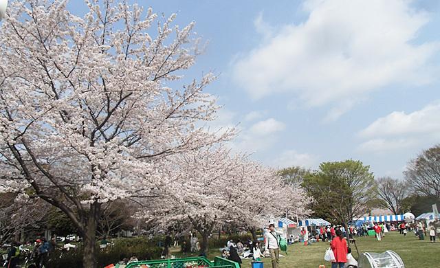 満開の桜と家族連れ