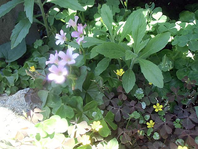 可愛い草花