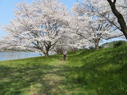 お花見散歩楽しいね