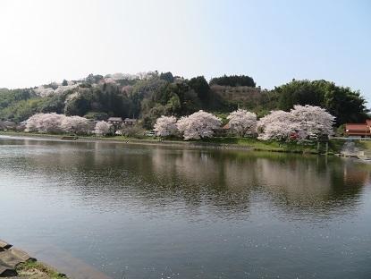 桜2019-2