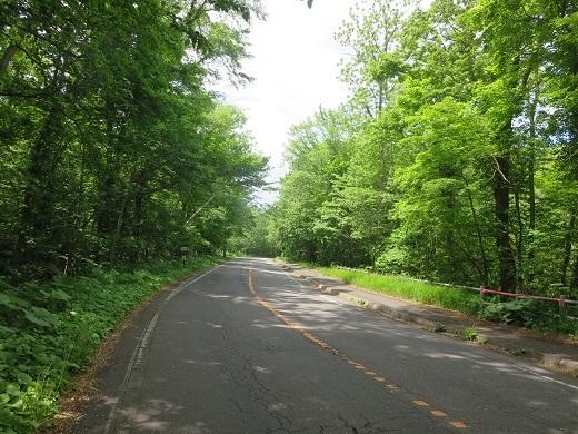 大沼公園の道