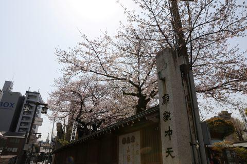 20190330sakura.jpg