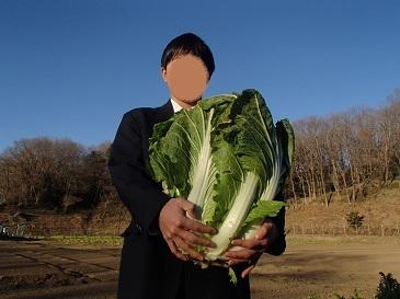 これぞ!下山千歳白菜