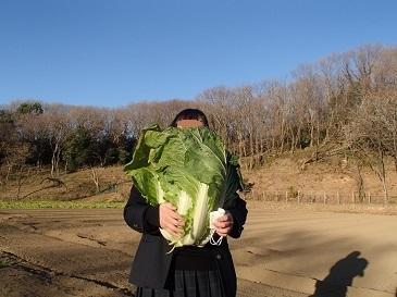これぞ!下山千歳白菜2