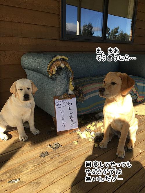 11042019_dog2.jpg