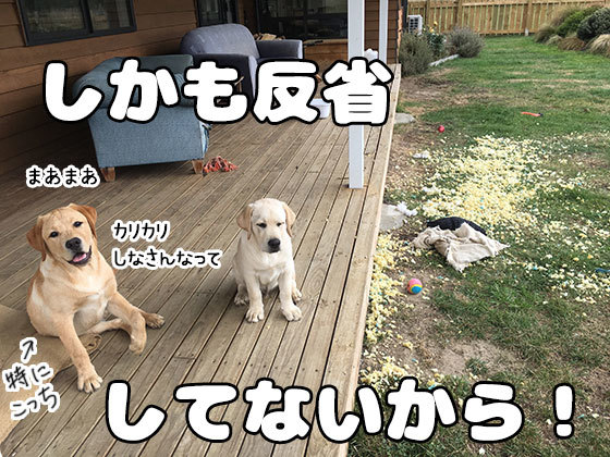 11042019_dog4.jpg