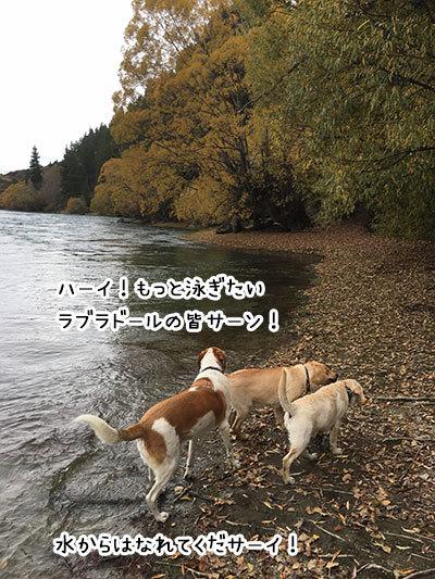 22042019_dog2.jpg