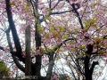 富山市ファミリーパーク7