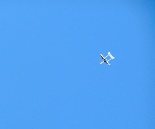 デーモン、イエローの方、、飛んでるトコ。