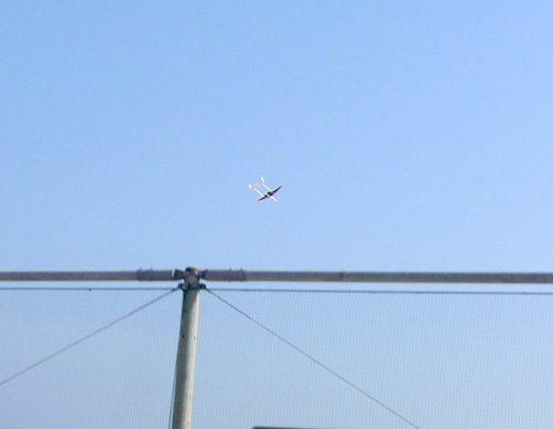 デーモン、ピンクの方、、飛んでるトコ。