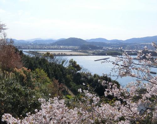 桜、更にきれいになってきたね。