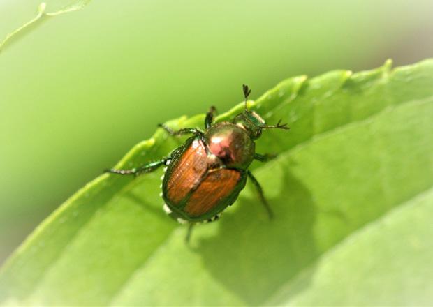 虫のイメージ