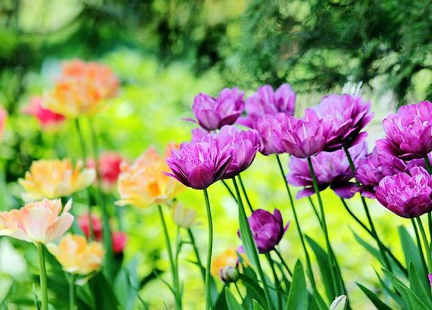 花が咲く草原イメージ