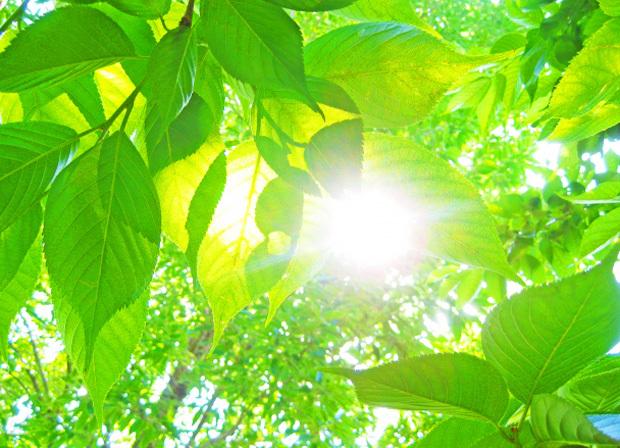 日の光パワーイメージ