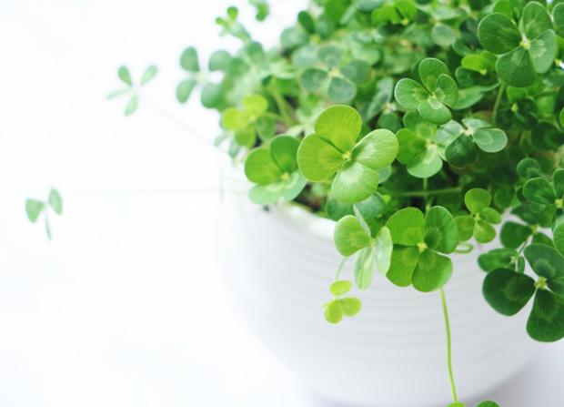 観葉植物トイレイメージ
