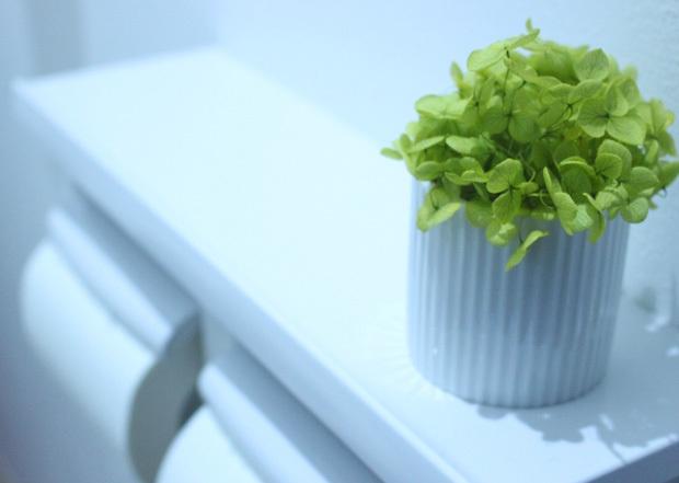 トイレイメージ観葉植物