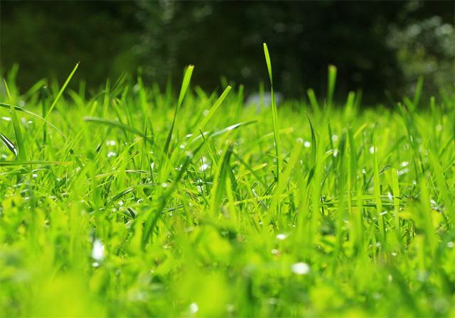 隣の芝生イメージ