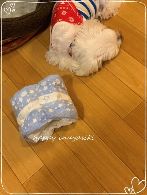mini2019IMG_2408 (編集済み)