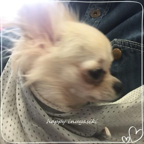 mini2018IMG_5916.jpg