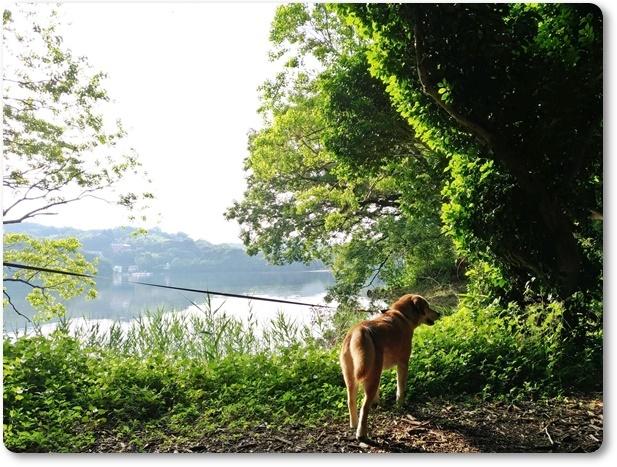 一碧湖散歩