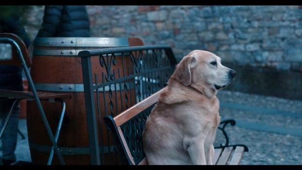 Netflix-Dogs3