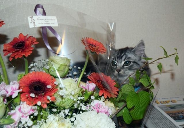 お花とレオンweb