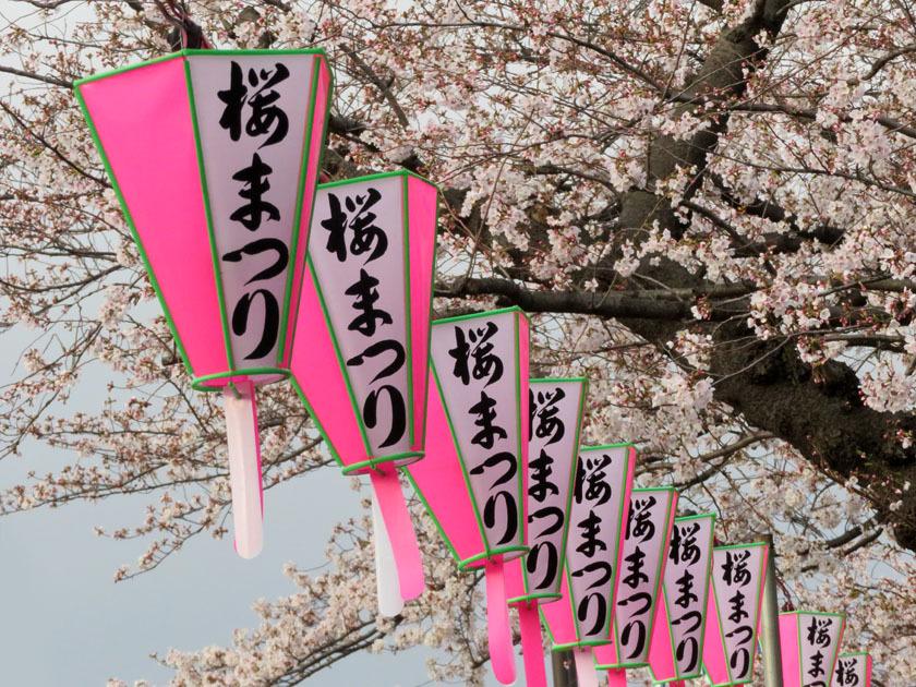 桜_edited-1