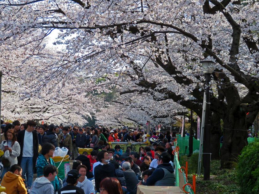 上野公園 花見_edited-1