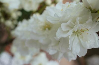 218花桃
