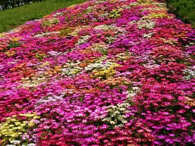 2019年5月可児花フェスタ公園11