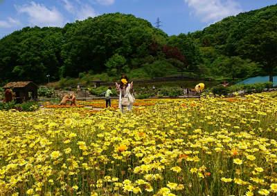 2019年5月可児花フェスタ公園10-crop