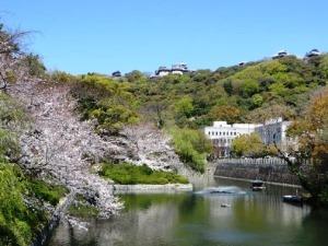 2019松山城桜
