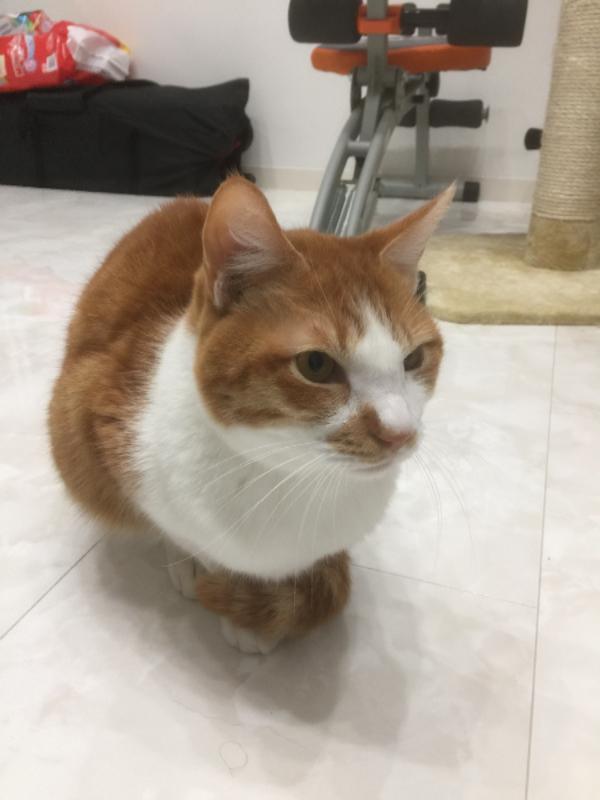 姪っ子の家に飼ってる猫