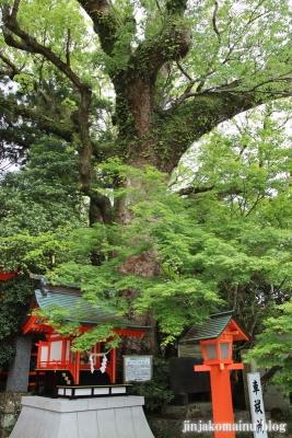 枚聞神社(指宿市開聞十町)7